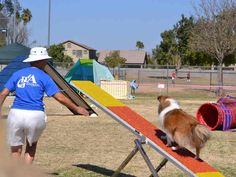 Good Dog Agility