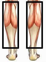 The Best Calf Muscle Exercises for Building calves