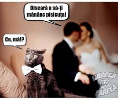 Funny Cats, Funny Pictures, Memes, Movie Posters, Cat Humour, Animals, Nice, Caricature, Fanny Pics
