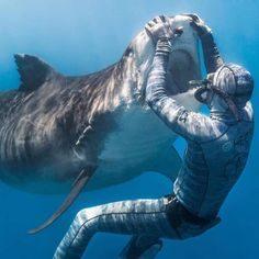 🔥 Diver coming face to face with a tiger shark 🔥 Shark Pictures, Shark Photos, Shark Pics, Hilarious Pictures, Save The Sharks, Shark Bait, Underwater Life, Great White Shark, Mundo Animal
