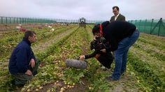Les équipes de TF1 se sont déplacées sur notre belle île pour faire un reportage sur la pomme de terre primeur de Noirmoutier. Hiking Boots