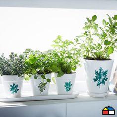 Las hierbas aromáticas tienen la capacidad de convertir tus platos en ricas comidas, ideales para condimentar guisos y potenciar el sabor de cualquier receta que prepares