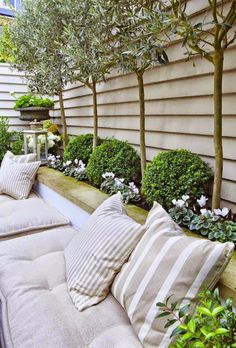 backyard landscaping with seating site (those standard olive trees are sensational)