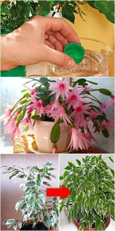 Idea Of Making Plant Pots At Home // Flower Pots From Cement Marbles // Home Decoration Ideas – Top Soop Home Flowers, Indoor Flowers, Exotic Flowers, Beautiful Flowers, Porch Plants, Indoor Plants, House Plants, Cactus Flower, Flower Pots