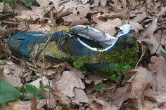 Wild mature in Romania