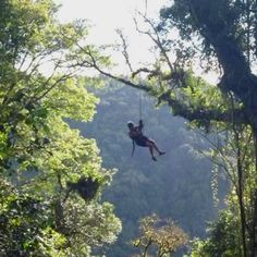 Tarzan swinging, zip lining and superman flying at monte verde costa rica -- 10 days til this is me.