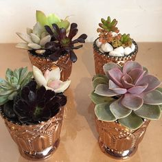 fabulous vancouver florist Love these hostess gift succulents we are creating for the season. Dressing up the store for the holidays . #flowerfactory #succulents #holidays by @flowerfactory  #vancouverflorist #vancouverflorist #vancouverwedding #vancouverweddingdosanddonts