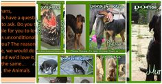 Dogs In Brazil-Help Us -Help Them - Create your own beautiful photo gallery on Slidely