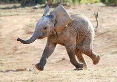 Baby elephant looks so happy!!