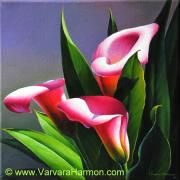 Varvara Harmon - Pink Calla Lilies-2