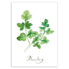 PARSLEY print, Herbs, Country Kitchen wall decor watercolor painting poster, Food art, 5X7 Green culinary Home decor, Condiments