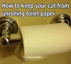 keep your cat from unrolling toilet paper - Life hacks, diy, cool tricks, clever, meme Simple Life Hacks, Useful Life Hacks, Cat Hacks, Gatos Cats, Great Life, Cat Scratching, Good To Know, Helpful Hints, Photos
