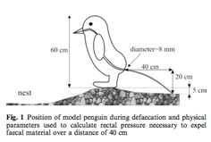 Pressures produced when penguins pooh From: calculations on avian defaecation. Victor Benno Meyer-Rochow & Jozsef Gal, in Polar Biology -Rich Science Diagrams, Funny Charts, Peer Review, Weird Science, Funny As Hell, Research Paper, Data Visualization, Investigations, Science Nature