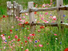 I love a walk in a meadow of wildflowers