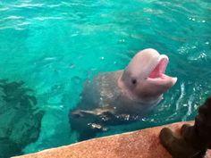 Port of Nagoya Public Aquarium Beluga in Japan 2012.4.8 【Travel】