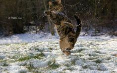 Kunf fu cat