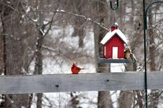 bird houses in the snow | cardinals in the snow | Birds & Their Houses