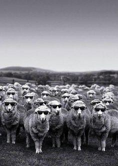 Hmmm...counting sheep.