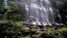 Russell falls in tasmania australia wallpaper | AllWallpaper.in ...