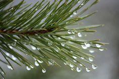 lauluni sadepäivän varalle: Maaliskuu