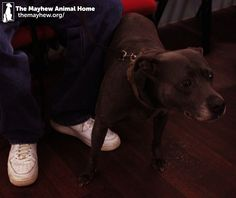 Our Animal Welfare Offices met adorable China and her homeless owner at an event hosted by Spitalfields Crypt Trust, where they gave China free health checks including flea and worming and free bags of food! Please share to support the work our Animal Welfare Officers do for the homeless! https://themayhew.org/about/local-community-work/working-with-the-homeless/