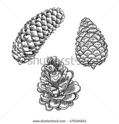 Fir-cone Stock Photos, Royalty-Free Images & Vectors - Shutterstock