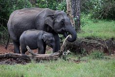 Bandipur National Park In India On Mirchi Travels is wonderful adventurous places and national park in india. You will love to see bandipur national park tourism.