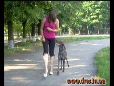 Наша жизнь - дрессировка! и воспитание собаки