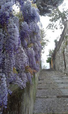 sentiero che conduce al castello di chiavari
