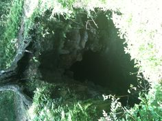 Lecanto Caves Withlacoochee Forrest, Fl.