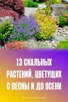 Дизайн Овощного Огорода, Травы, Ландшафт, Овощи, Растения, На Открытом Воздухе, Цветы, Газированные Напитки, Садоводство