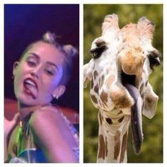 Miley Cyrus VS Giraffe...