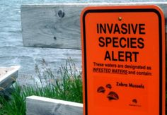 This is an every day example of an invasive species and how dangerous they can be considered.