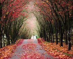road, flowers, cute,