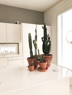 Our kitchen table with my cacti collection. Cacti, Planter Pots, Lifestyle, Kitchen, Table, Home Decor, Collection, Cactus Plants, Cooking