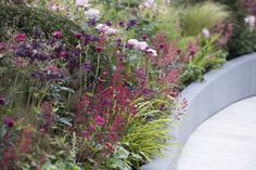 GAP Photos - Garden & Plant Picture Library - GAP Photos - Specialising in horticultural photography
