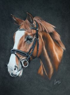 Horse, pastel 30x40 by 26lisamarie