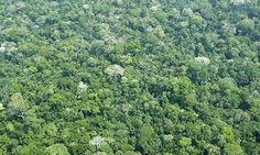 The Amazon rainforest in Peru. Oil production is planned for a remote region near the border with Ecuador. Photograph: Getty Images/Hemis.fr...