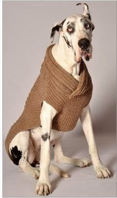 Shawl Collar Ragg Wool Dog Sweater on a Great Dane. Knit Dog Sweater, Dog Sweaters, Chilly Dogs, Great Dane Dogs, Dog Boutique, Dog Jacket, Dog Coats, Big Dogs, Small Dogs