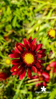 A pretty red and yellow flower.