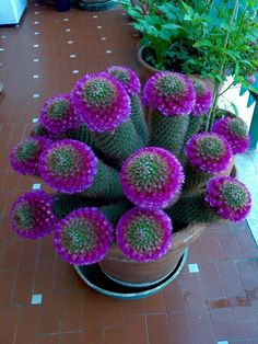 cactus flower and fern candle Planting Succulents, Blooming Cactus, Flower Making, Trees To Plant, Succulent Gardening, Unusual Flowers, Unusual Plants, Succulents, Plants