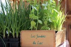 Marché locavore - Les jardins du lac my weekly vegetables and fruits bio basket in the summer time!