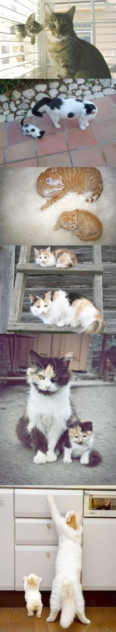 Cats and their kittens. #WhyILoveCats