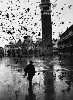 Pigeons flocking above.