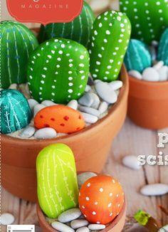 cactus con piedras de rio