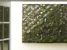 Living wall planter. Great way to keep the gatos away from your plants.