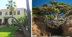 Incredible #Trees That Wouldn't Let Anything Stop Them From Growing
