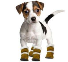 Los zapatos para perros. Los perros son un miembro importante en las familias, por lo que debes mostrales cariño y, sobre todo, proporcionarles los cuidados necesarios para garantizar su integridad física. Veamos algunas consideraciones importantes al momento de comprar zapatos para perros.