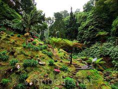 S. MIGUEL (Açores / Portugal): Parque Natural da Ribeira dos Caldeirões.