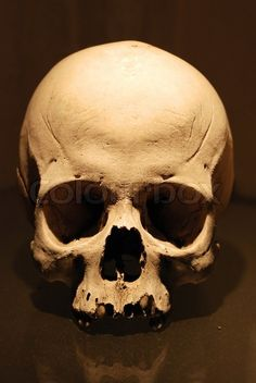 Human Skull | Stock Photo | Colourbox